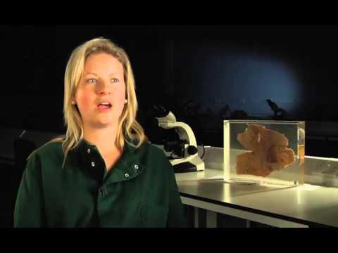 Bristol University - Bristol Veterinary School - Interview process