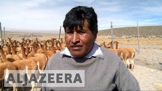 Peru's alpaca herders pin hopes on APEC meeting