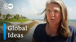 An invasion of brown algae in Mexico | DW Global Ideas
