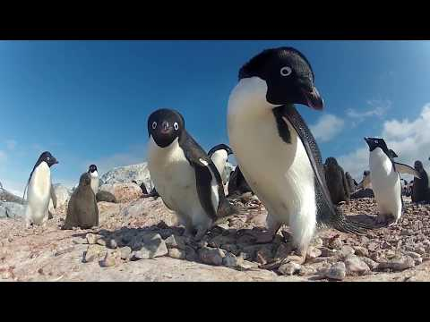 Penguins starving in East Antarctica: behind the BBC news headlines