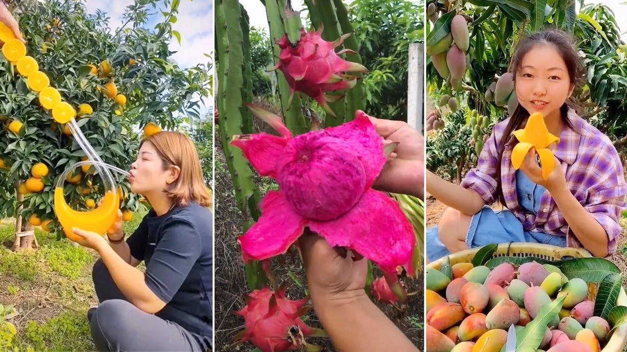 How to Slice Fruits on Tree | Amazing Fruits Cutting Skills