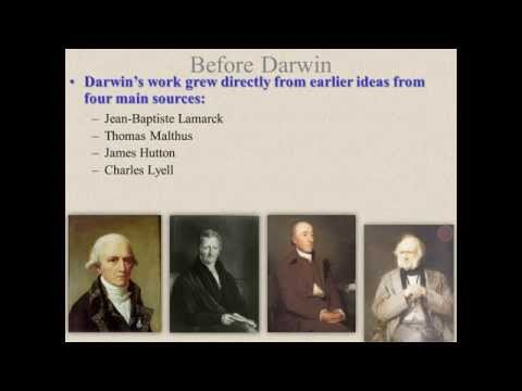 darwin s influence on psychoanalysis Free essay: darwin's primal influence on psychoanalysis charles darwin's substantially influential writing examines a vast rang of topics that were brought.