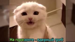 Коты поют песню про ядерный гриб
