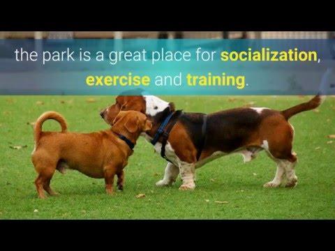 Dog Park Etiquette 101