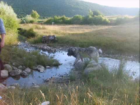 Selo Lukavac - Nevesinje.wmv
