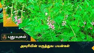 எண்ணற்ற மருத்துவ குணங்கள் கொண்ட அவுரி மூலிகை | அறிவோம் ஆரோக்கியம் | Puthuyugam TV