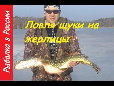 Видеозапись Зимняя рыбалка на жерлицы в марте.  Ловля щуки зимой на живца