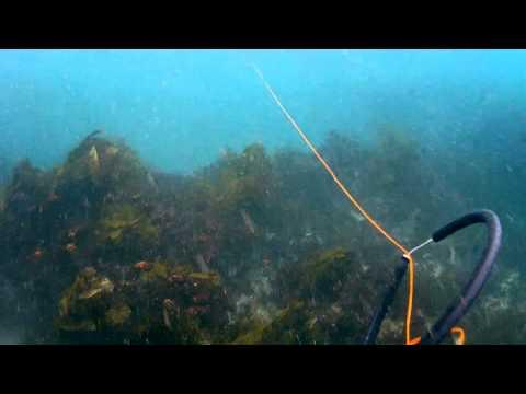 Port Stephens  Rockhop Spearfishing