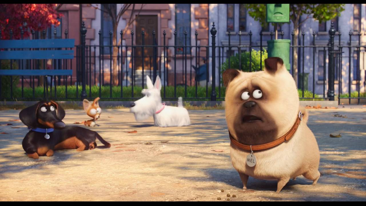 9fe9505b6 Tajný život maznáčikov (The Secret Life of Pets) 2 oficiálny trailer ...