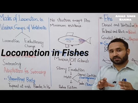 Ch 16 Lec 25 Locomotion In Fishes, Class 12 Biology