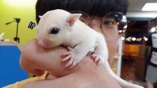 하얀색 하늘다람쥐가 태어났습니다??!!! [정브르]