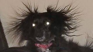 ПРИКОЛЫ С ЖИВОТНЫМИ Смешные Животные Собаки Смешные Коты Приколы с котами Забавные Животные 112