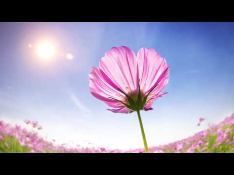 Secret Garden Music: Relaxation, Meditation, Zen and Serenity 1 HOUR Relaxing Music