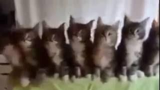 поющие коты#1(, 2016-06-04T12:54:55.000Z)