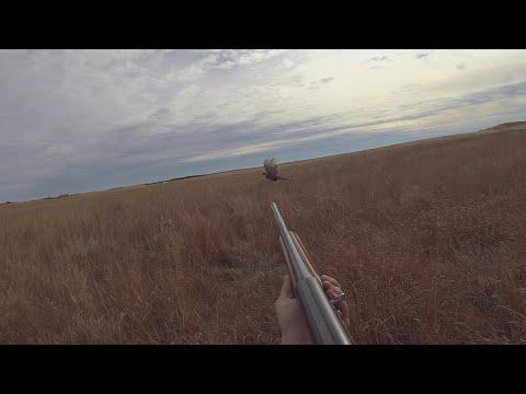 Rooster Bonanza 2019!  Wild Kansas Pheasant Hunting - 2 Man Limit By Noon!!
