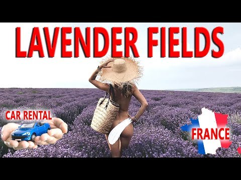 Lavender fields or crazy travel to Provence (France). Car rental in France.Lost in paradise!