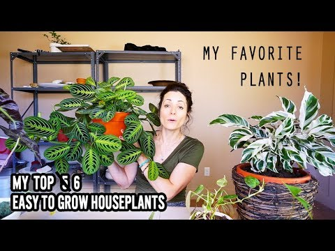 Favorite Easy to Grow House Plants - good for beginners
