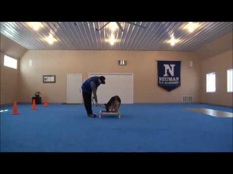 Gretchen German Shepherd Video Trained Dog
