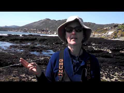 Disease Killing Sea Stars At Shell Beach