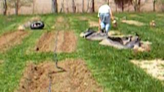Boulder Belt Eco Farm: How to Lay Drip Tape and Plastic Mulch by Hand pt 2