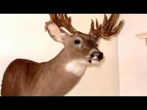 Turdy point buck
