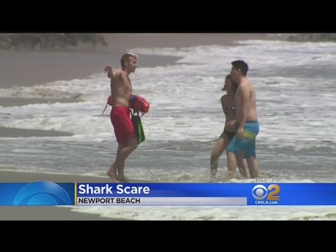 No Swimming At Newport Beach After Shark Bite