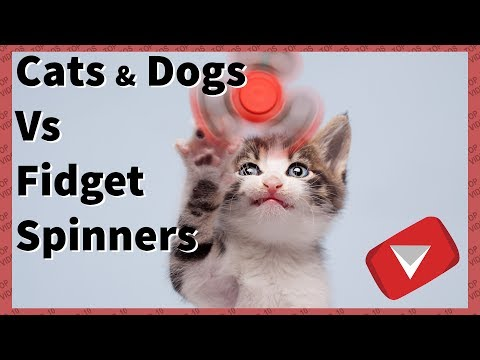 Cats and Dogs vs Fidget Spinners Compilation [Funny] (TOP 10 VIDEOS)