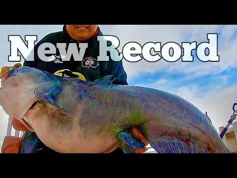 New Record Catfish On My Boat