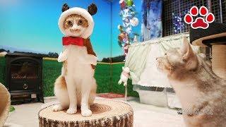 まやのトナカイコスプレ【瀬戸のまや日記】Cute cat Maya's in reindeer costume Cats room Miaou thumbnail