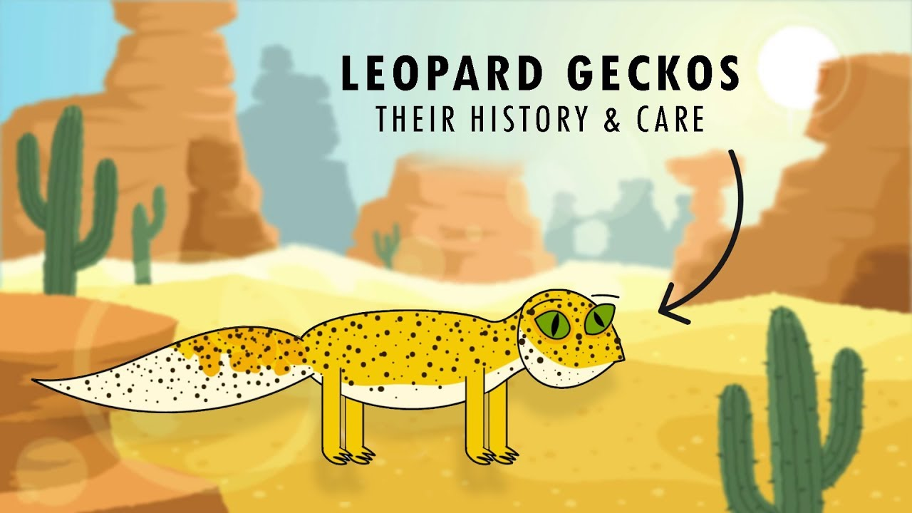 An Introduction To Leopard Geckos Their Care Youtube