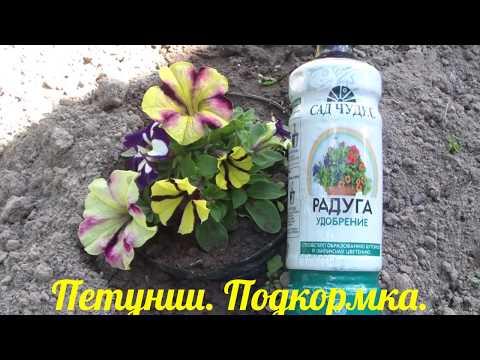 Подкормка ПЕТУНИЙ для пышного цветения.