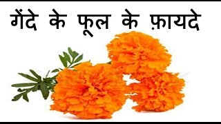 गेंदे के फूल के फ़ायदे  | Health Benefits of Marigold Flower| gende ke phool ke fayde