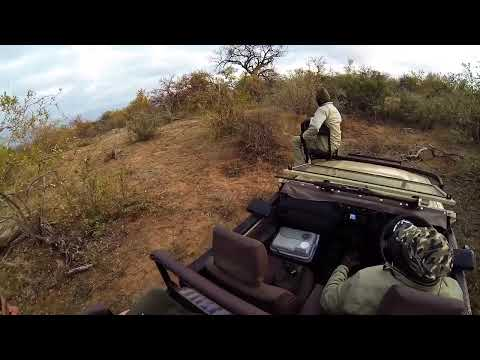 GoPro: Lions Fighting Five Feet From Us @ Kruger Park