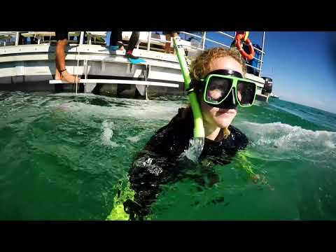 Moreton Island Wrecks tour - Ferry plus 3 Activities