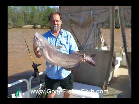Video March catfishing
