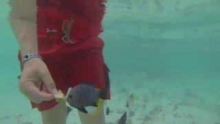 Отель Adaaran Select HudhuranFushi 4*, Северный Мале, МАЛЬДИВЫ (видео, отзывы, туры, бронь)(Забронировать или купить тур онлайн со скидкой до 20% в отель Adaaran Select HudhuranFushi 4* (бывший Lohifushi Island Resort) на МАЛЬД..., 2016-01-02T11:15:47.000Z)