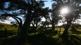 BEETHOVEN Sonate Piano n°14 Clair de Lune