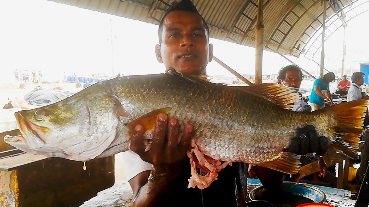 Sea Bass Cutting | Fish Cutting Skills