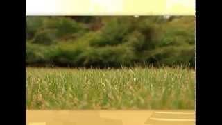 Выращиваем идеальный газон