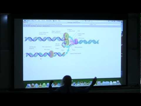 #16 BB 350 DNA Replication I - Kevin Ahern's Biochemistry Online