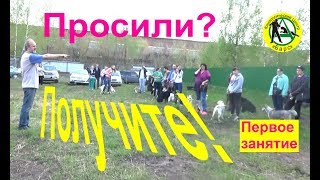 Первое занятие  Кинологический центр Барс  Дрессировка собак в Новосибирске