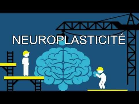 Le pouvoir extraordinaire de notre cerveau !