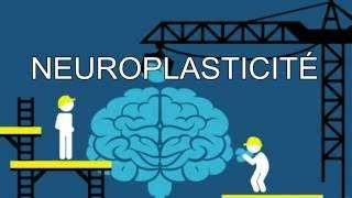La neuroplasticité expliquée simplement en 2 minutes