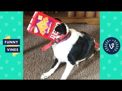 TRY NOT TO LAUGH – Funny PETS & ANIMALS | Funny Videos October 2018