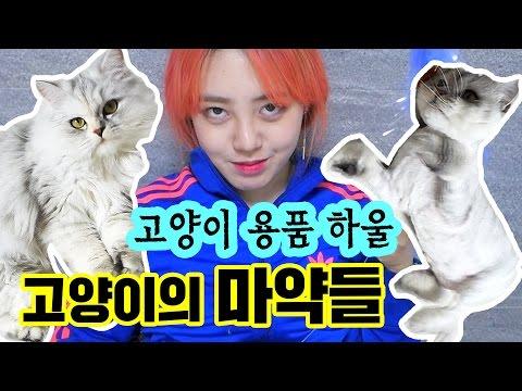 *최강 마약 장난감* 고양이의 마약들을 구매 해봤다!! [ 고양이들이 좋아서 환장하는 장난감 & 간식 & 생활용품 하울 ] 망가녀 Manganyeo