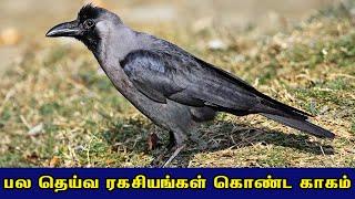 பல தெய்வ ரகசியங்கள் கொண்ட காகம் | Crow Sceret | Britian Tamil Bhakthi