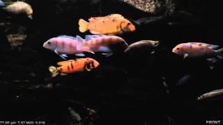 OBS multi-angle aquarium night shot
