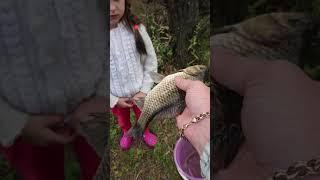 Поймал отпусти Карась на кукурузу Рыбалка на озере рыбалка озеро карась наживкадлярыбалки