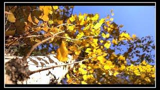Sonbaharın Renkleri ile Oyun