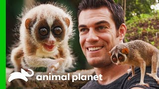 Dr. Evan Meets One Of The World's Most Fascinating Primates | Evan Goes Wild